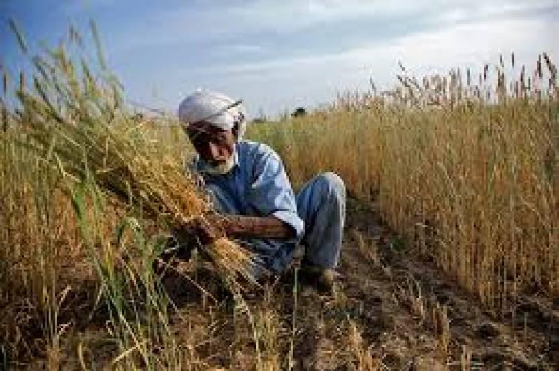 Image result for punjab kisan