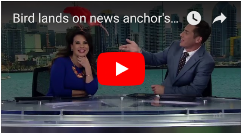 video exotic pink bird lands on anchor 39 s head in live tv show video goes viral. Black Bedroom Furniture Sets. Home Design Ideas