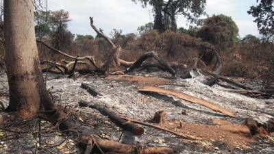 Eco-Degradation and Deforestation hazards