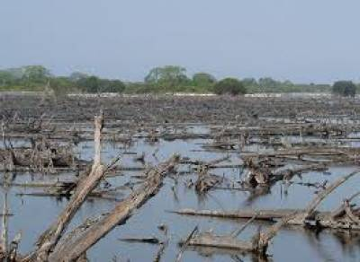 Mangroves, marine life in coastal areas threatened by pollution