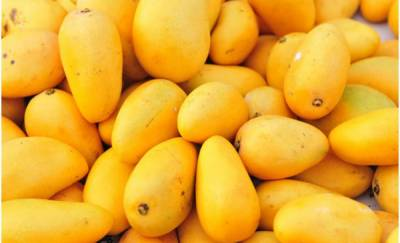 Pakistan has largest 'king of fruits' Mango cluster in world