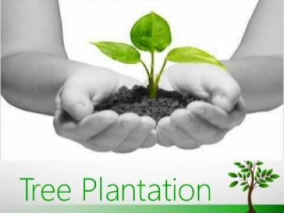 Record 20 crore trees planted in the Spring Season