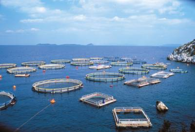 Does Pakistan has strategy to preserve AquaCulture?