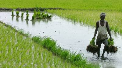 Climate change impacts on cultivation in Pakistan