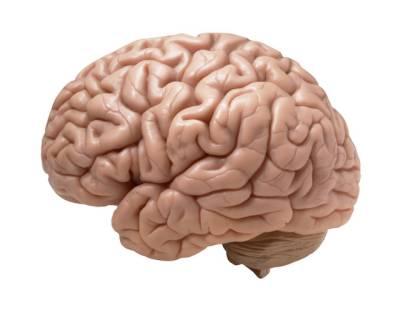 World Brain Day: An aging Brain is the healthier brain