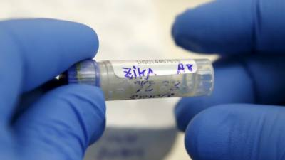 Zika antibodies discovered by Scientists
