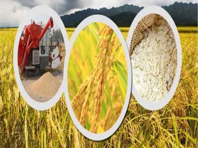 Khadim-e-Punjab Kisan Package to strengthen 40 million agro based Pakistanis