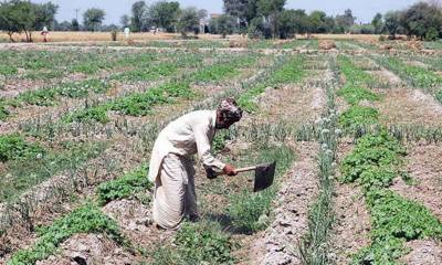 Subsidy on fertilizers: How is it benefiting for small farmers?