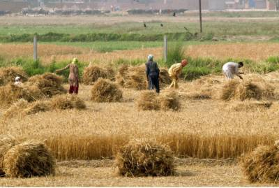 USAID - Engro Foundation Sign MoU to boost agriculture sector in Pakistan