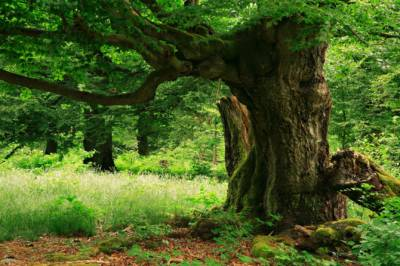 Climate Change: How trees are blessings for humans survival