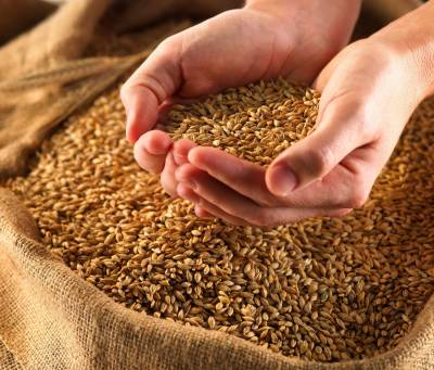 Free wheat seeds to farmers by Punjab government