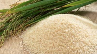 Punjab Agriculture Department advice for Rice growers
