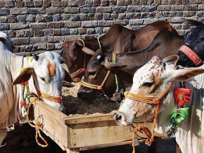 Eid ul Azha 2016: Rs. 200 billions rural economy