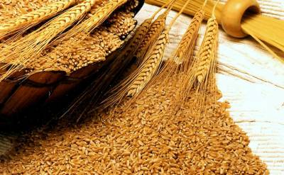 Pakistan becomes world's No.6 wheat producing country