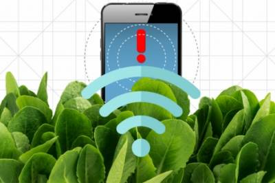 A plant discovered at MIT which can detect explosives