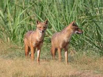 Punjab wildlife protection force established