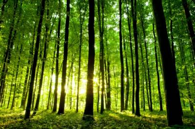 Green Pakistan Programme to revive forest, wildlife