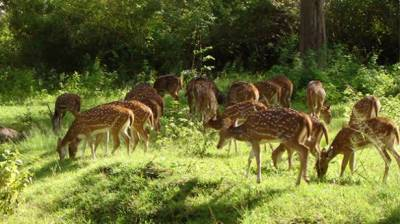 Survival of wildlife, forestry Resources projects worth Rs. 4.7 billion launched