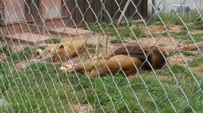 British Zoo animal death toll reaches 500