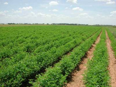 Export Processing Zones to be established in Sindh