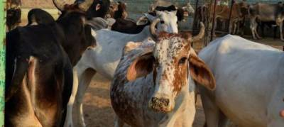 Cow protection bill 2017 introduced in Indian Parliament
