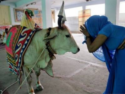 Indian government imposes 10% tax over cow protection