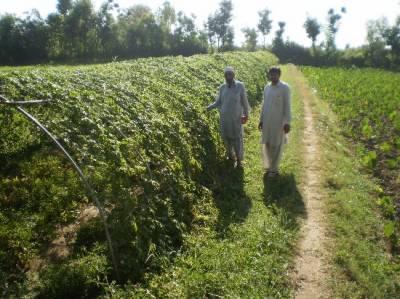 KP govt holds training programme for farmers in Khyber Agency