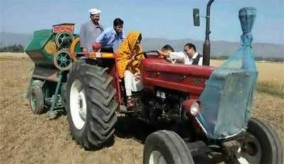Reham Khan harvest wheat in her local village