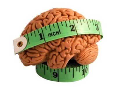Animals having largest brain volume are more intelligent: Study
