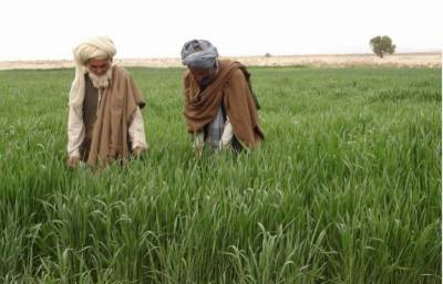 FATA Agriculture department launched schemes for farmers