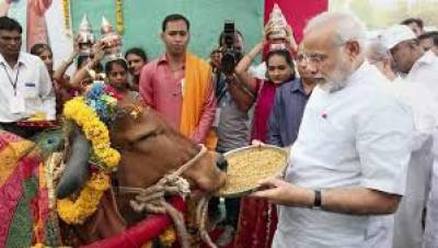 Modi government bans sales purchase of Cows in India for slaughter purpose