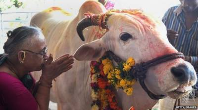 Cow is substitute to GOD: Indian High Court Judge