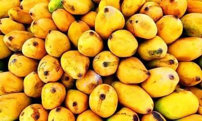 Pakistani Mango demand rises in international Market
