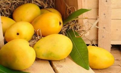 Pakistan's Mango and Kinnow exporters get good news