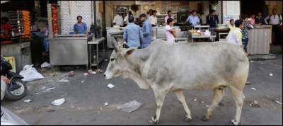 Two Indian Muslims killed over sacred cow transportation