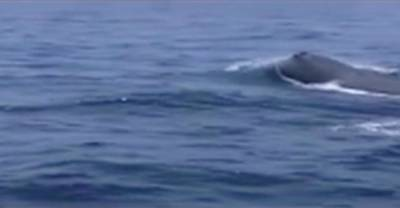 Rare sperm whale spotted for first time in Pakistan