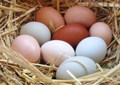 Special eggs containing drugs to fight cancer, research study