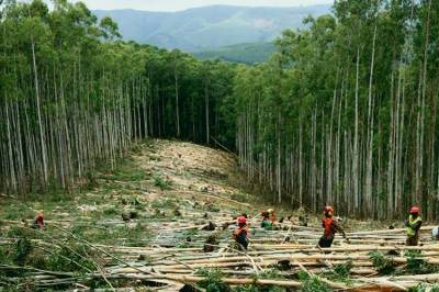 KP Forest Department fights against Timber mafia