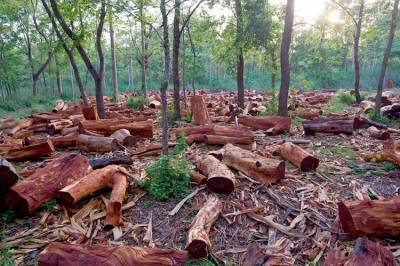 Deforestation in Pakistan: Disastrous consequences