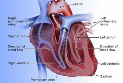 30 to 40 percent of deaths in Pakistan are due to cardiovascular diseases (CVD): Cardiologist