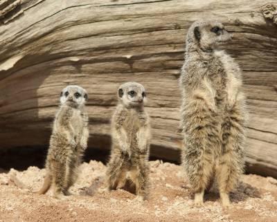 PTDC mega project to set up wildlife park near Kular village on motorway:MD PTDC