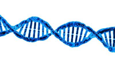Chinese researchers map key protein in DNA repair with near-atomic resolution