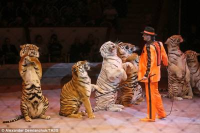 Scotland bans use of wild animals in travelling circuses