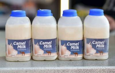 Punjab to provide Camel Milk to masses