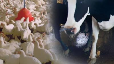 Pakistan China to enhance veterinary sciences cooperation
