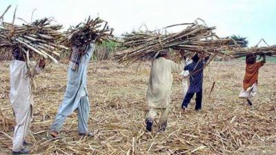Shahbaz reviews issue of payments to sugarcane farmers