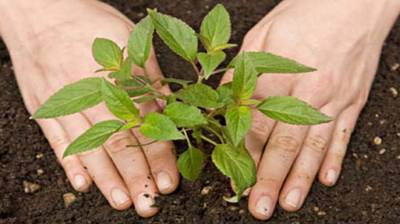 Spring tree plantation campaign begins in GB on Feb 15