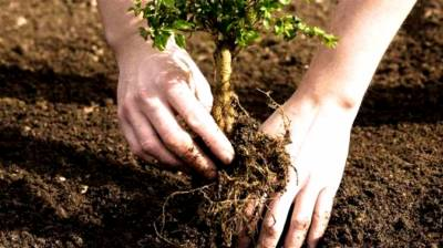 Govt approves over 3b rupees to plant 100 million trees