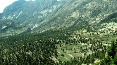 Rs3.6b to be spent on planting 100m trees in next five years