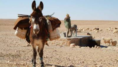 Donkey Bombs: Afghan Taliban new weapon of war